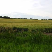 Dickinson County, Kansas